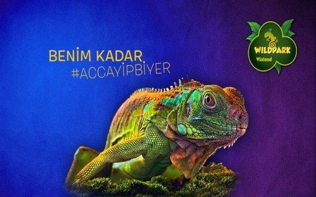 Dünyanın En Egzotik ve Vahşi Canlıları ile Göz Göze Gelmeye Hazır mısın?